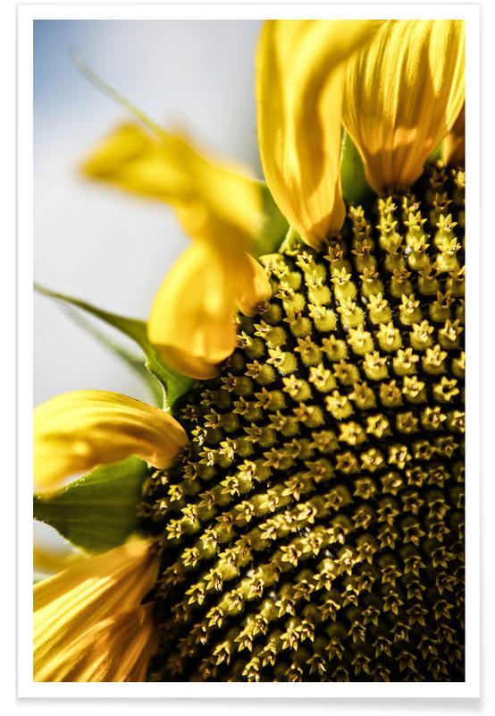 Tournesols, Sunflower affiche