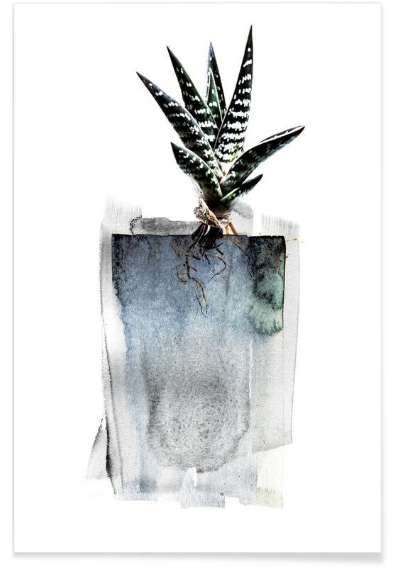 Kaktus, Blätter & Pflanzen, Aloe -Poster