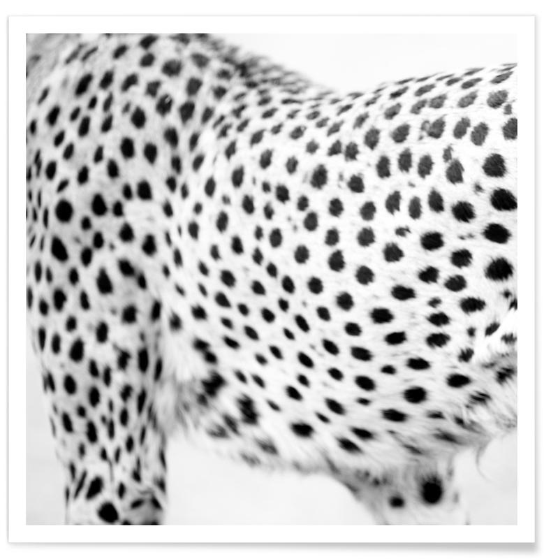 Noir & blanc, Zèbres, Africa Cropped 05 affiche