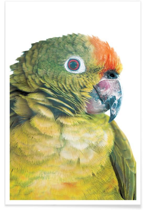 Birds of Paradise 05b Poster
