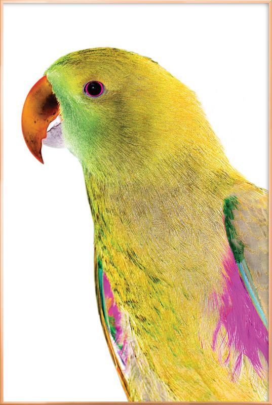 Birds of Paradise 09b Poster in Aluminium Frame