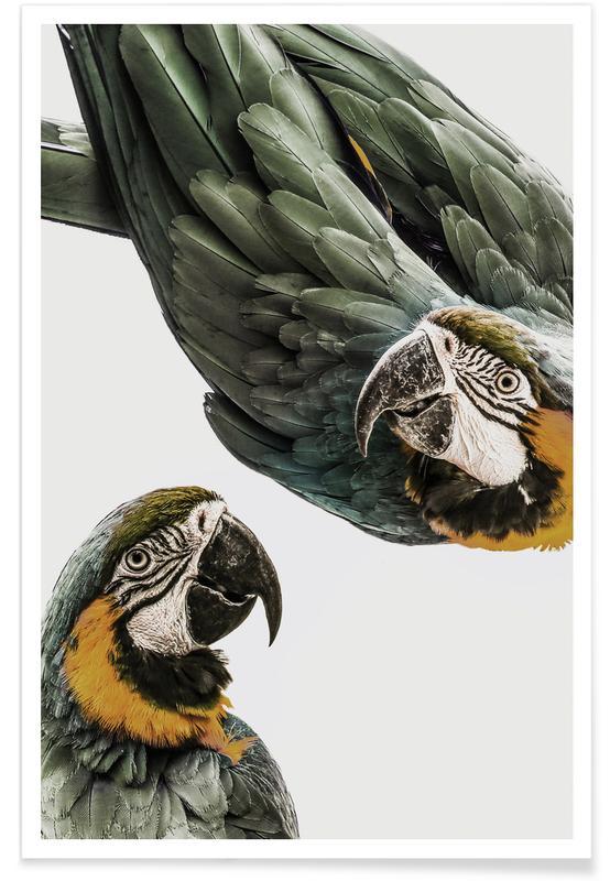 , Perroquets affiche
