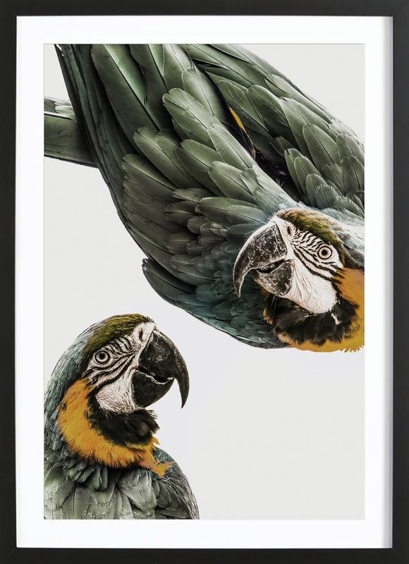 Birds of Paradise 01 Framed Print