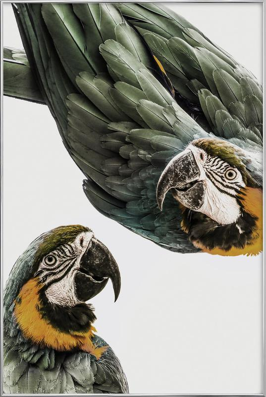 Birds of Paradise 01 Poster in Aluminium Frame