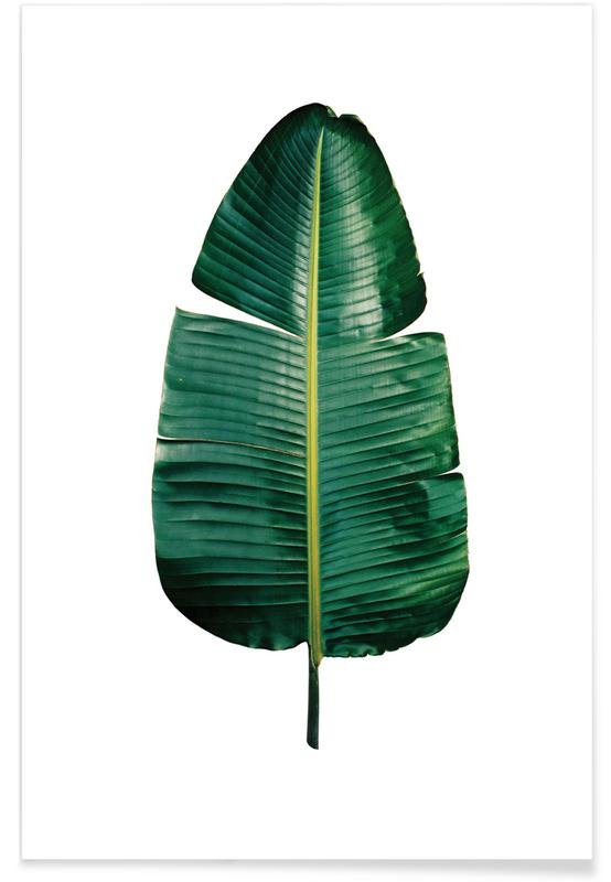 Classic Botanical Leaves 09 poster