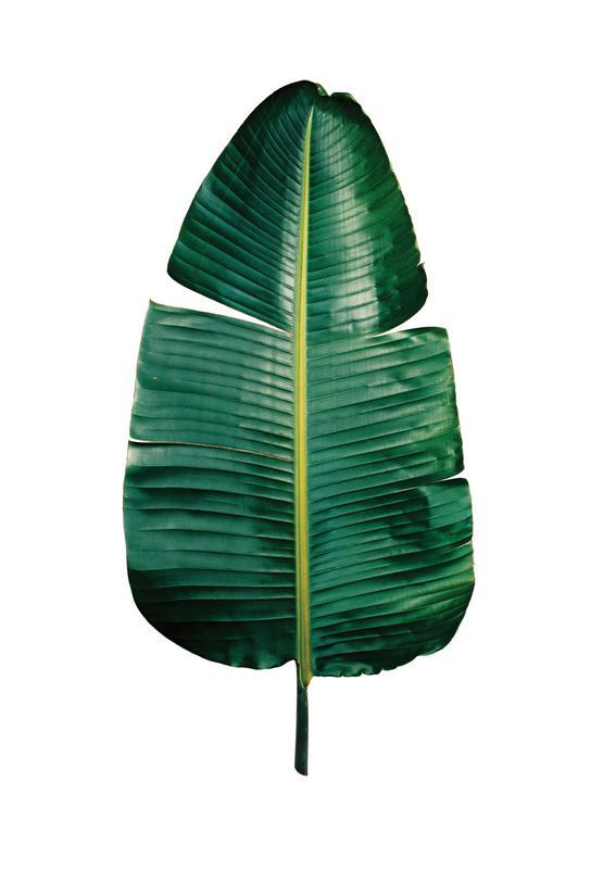 Classic Botanical Leaves 09 Aluminium Print