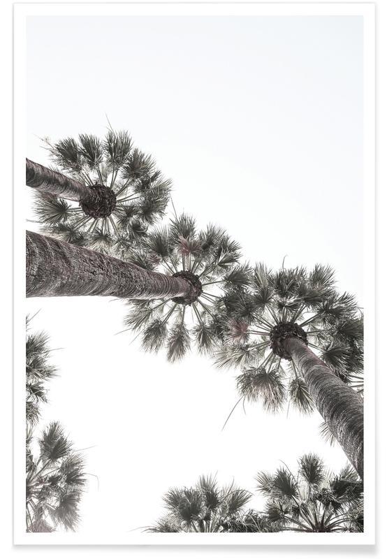 Desert Palm 02 Poster