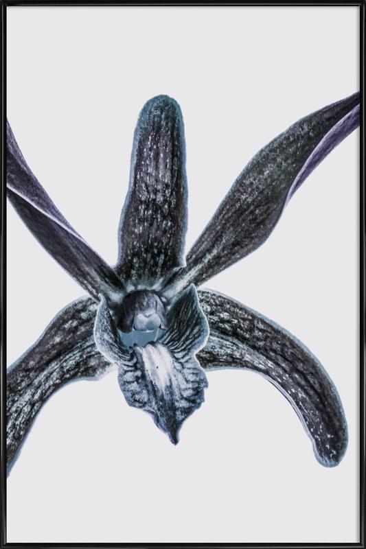 Orchid ingelijste poster