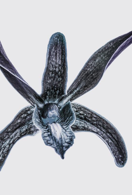 Orchid acrylglas print