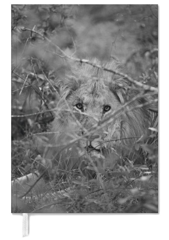 Black & White, Lions, Safari 01 Personal Planner