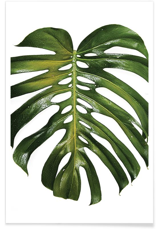 Photographie de monstera affiche