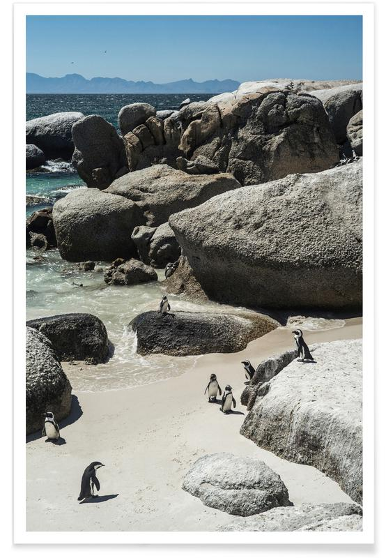 Boulders Beach -Poster