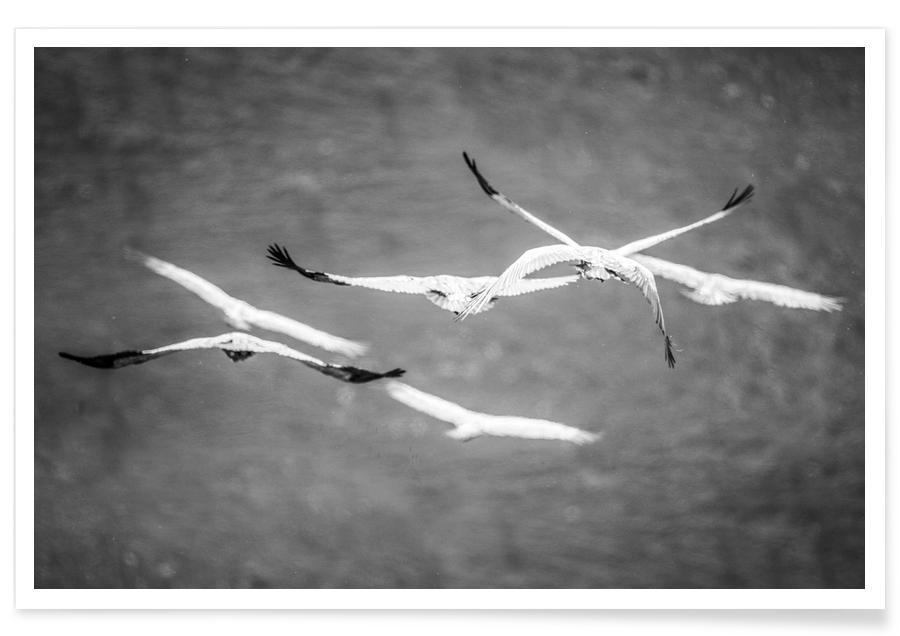 Meeuwen, Zwart en wit, Flight & Freedom poster