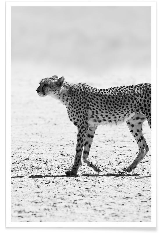 Leoparden, Schwarz & Weiß, Kitty Kat 01 -Poster