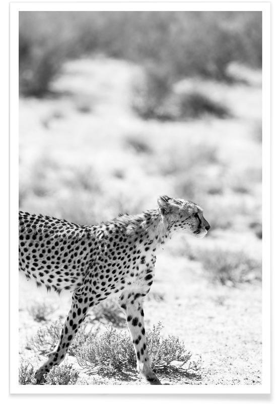 Leoparden, Schwarz & Weiß, Safari Kat -Poster