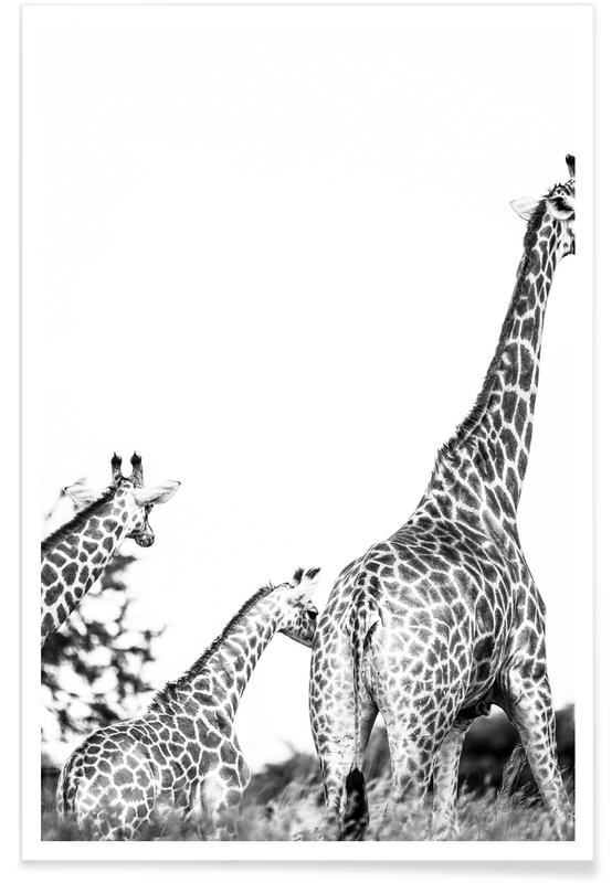 Zwart en wit, Giraffen, Mothers Child poster