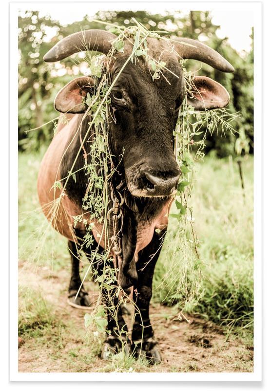Buffalos, Botanical Bull Poster