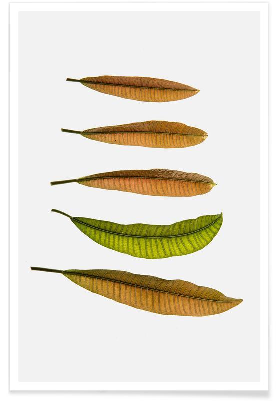 Leaves & Plants, Longifolia Poster