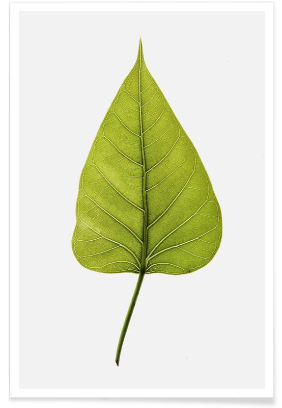 Hojas y plantas, Religiosa póster