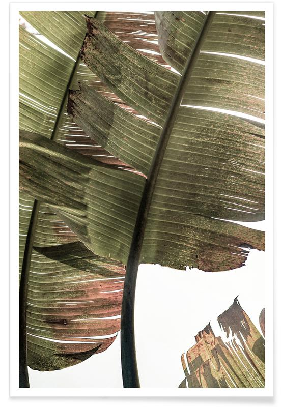 Blätter & Pflanzen, Gold Leaf -Poster