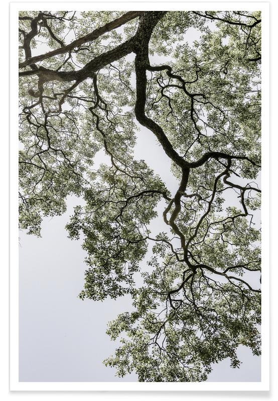 Reise, Coastal Forest -Poster