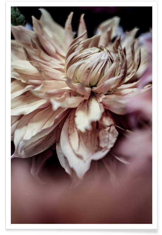 Reise, Morning Glory -Poster