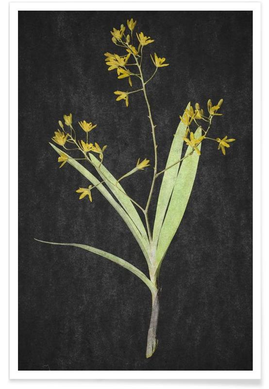 , Muti Orchid -Poster