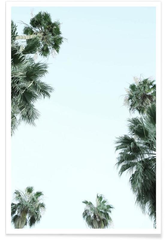 Palmen, Palm Springs -Poster