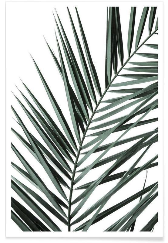 Palmiers, Phoenix affiche