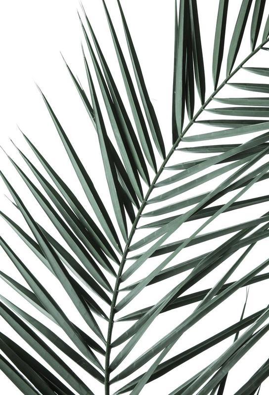 Phoenix -Acrylglasbild