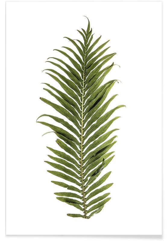 Baobab Leaf poster
