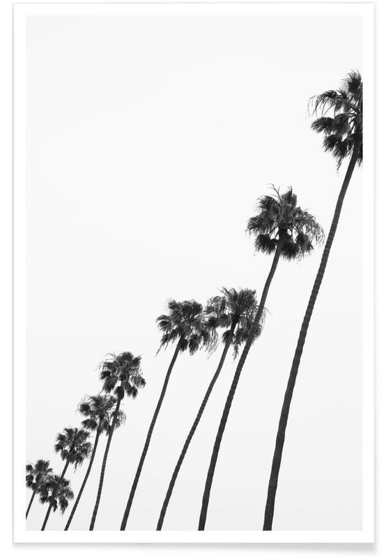 Noir & blanc, Palmiers, Cali Palms affiche