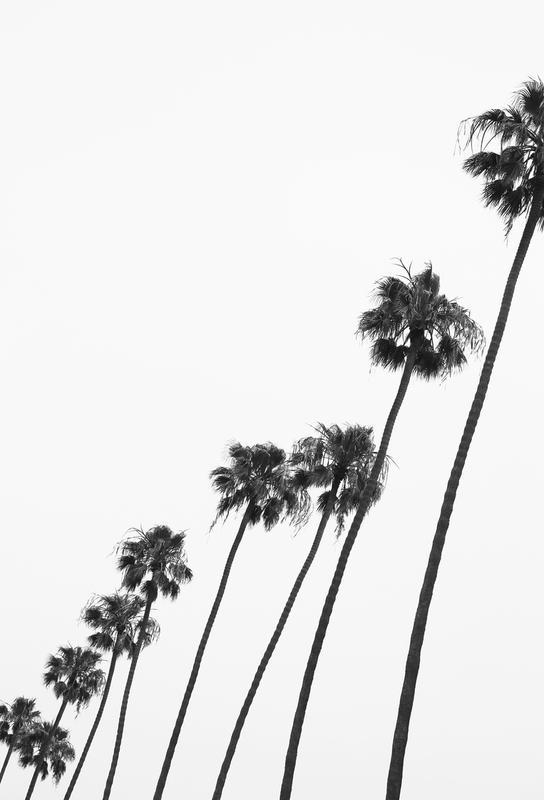 Cali Palms -Acrylglasbild
