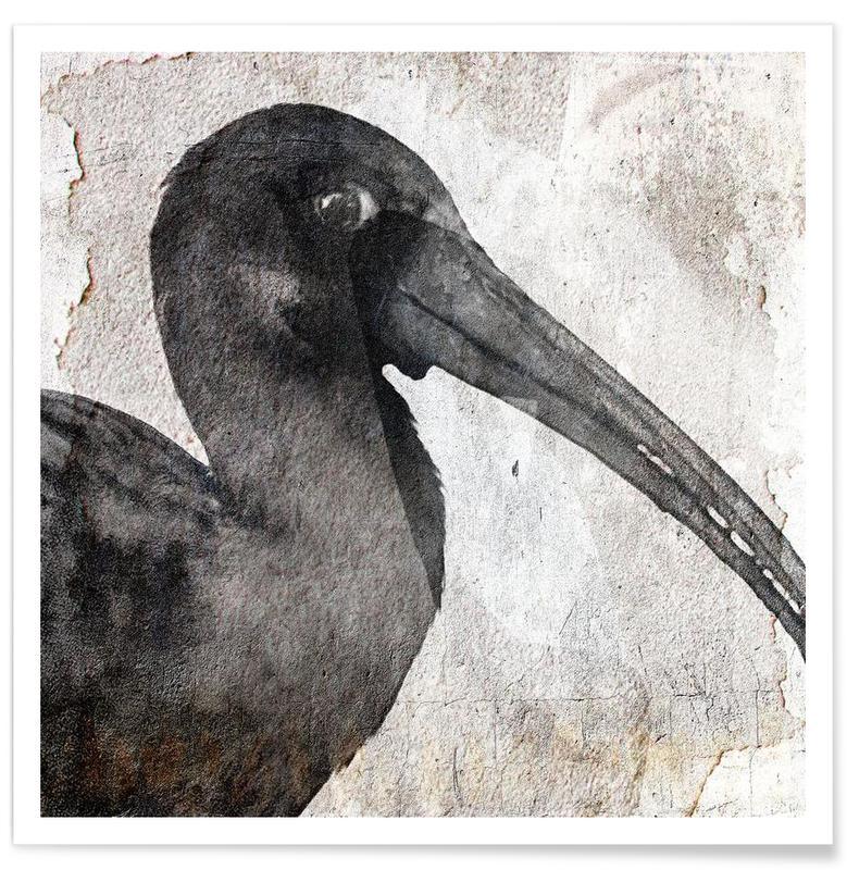 Noir & blanc, Grues, Birdy affiche