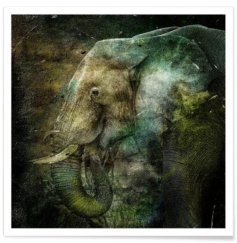 Éléphants, Ned affiche