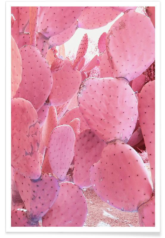 Kaktus, Pink Cactus -Poster