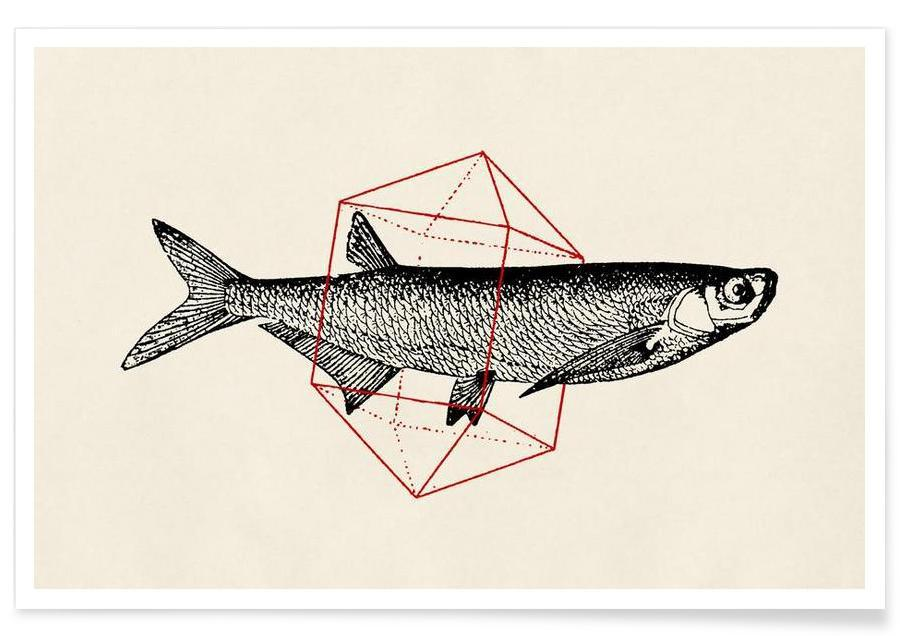 Fish, Fish in Geometrics II Poster