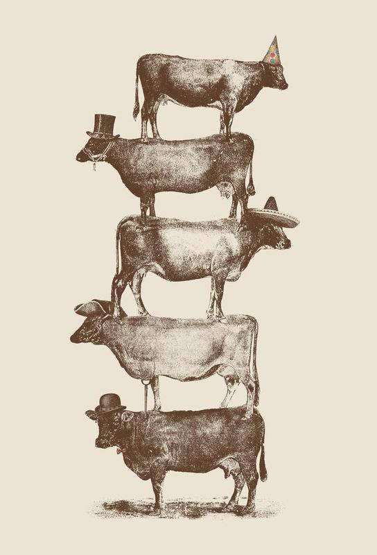 Cow Cow Nuts Aluminium Print