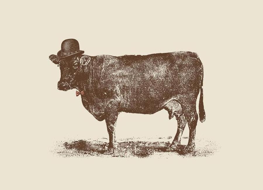 Cow Cow Nut -Leinwandbild
