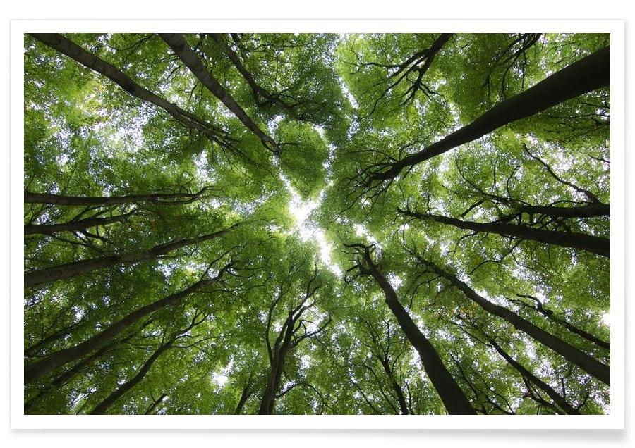 Arbres, Forêts, Hêtres affiche