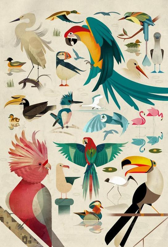 Birds acrylglas print