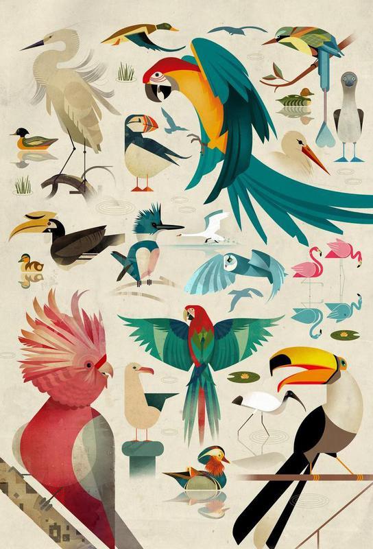 Birds alu dibond