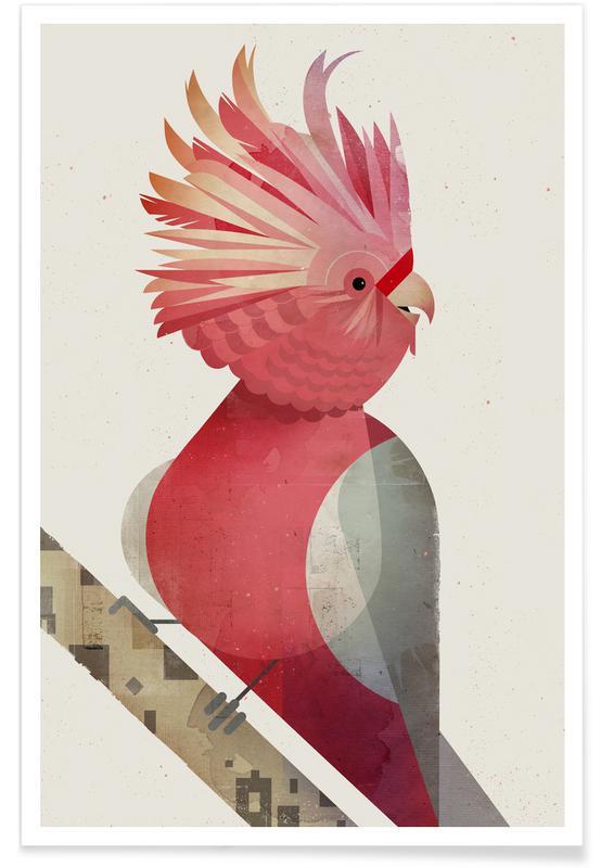 Art pour enfants, Galah Cockatoo affiche