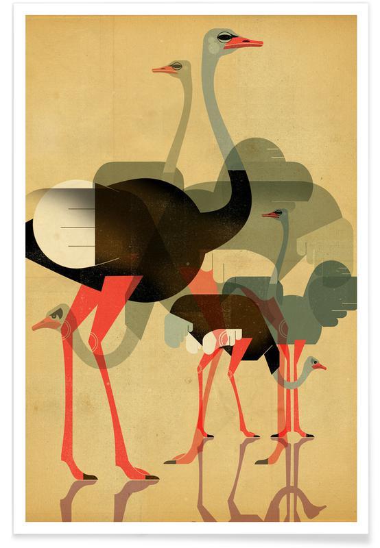 Art pour enfants, Ostriches affiche