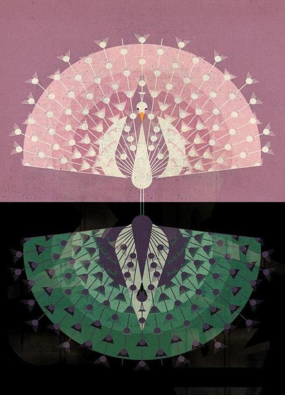 Peacock toile