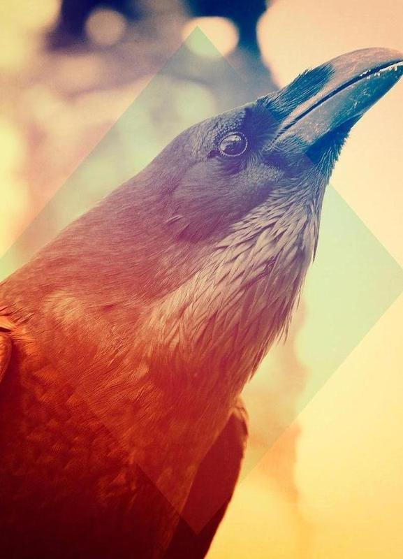 Crow canvas doek