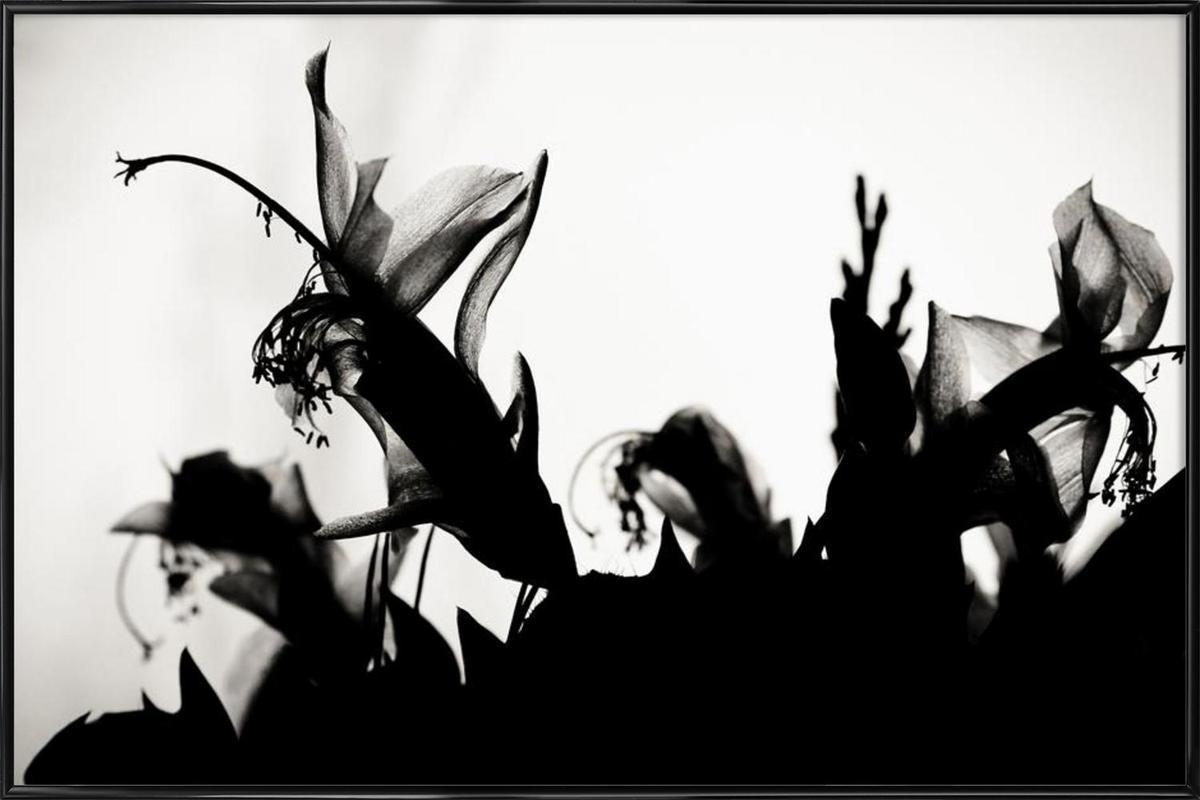 Blossoming II -Bild mit Kunststoffrahmen