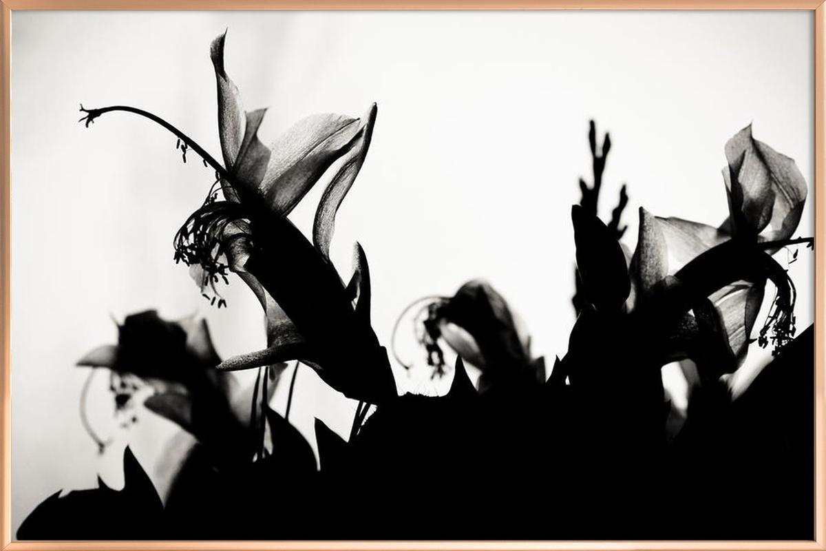 Blossoming II -Poster im Alurahmen