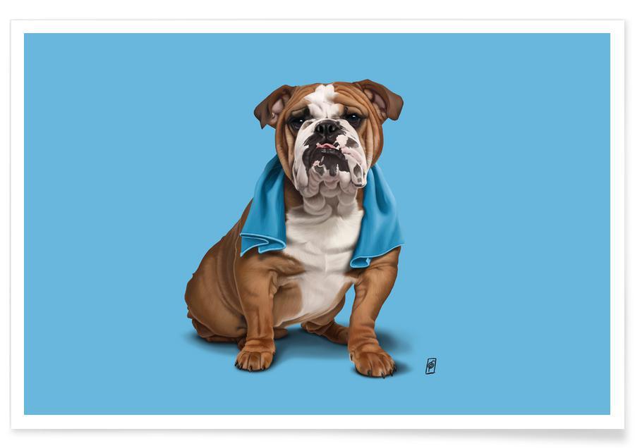 Hunde, Bull (Colour) -Poster