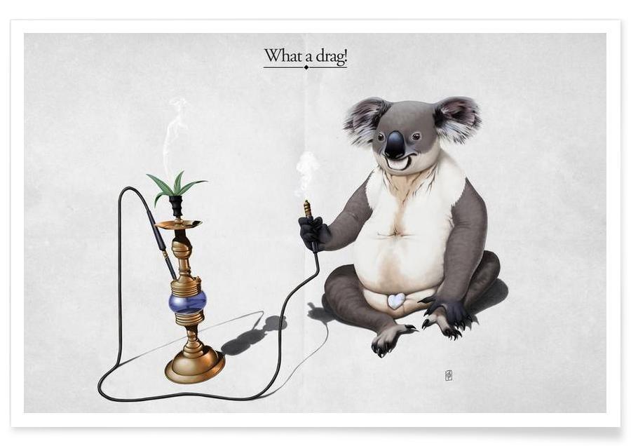 Koalas, What a Drag! (titled) affiche